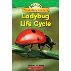 Ladybug Life Cycle (Paperback)